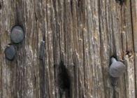 Szögek a kerítésben