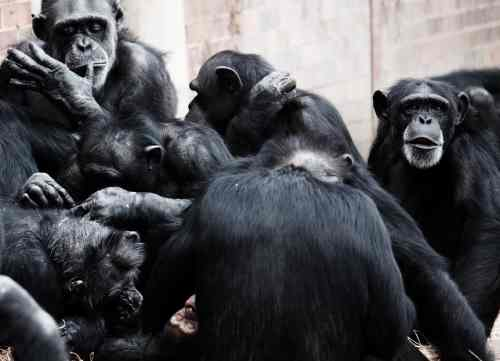 A majmok és a banán – avagy mi áll cselekedeteink hátterében?