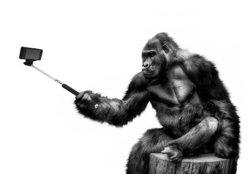 gorilla_szelfi