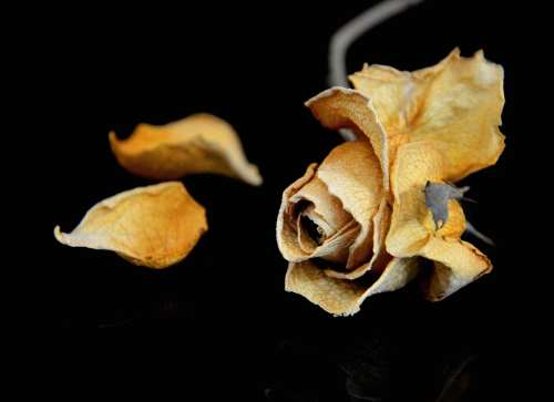 """Képtalálat a következőre: """"halott virág"""""""