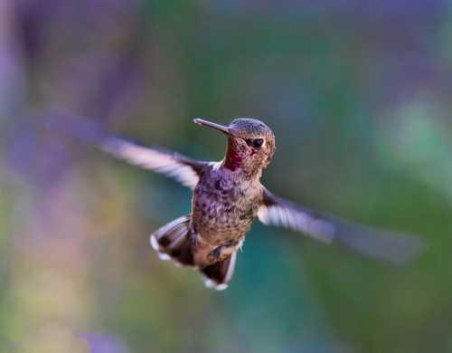 A kolibri és az erdőtűz – avagy a legkisebb tett is többet ér bármennyi szónál