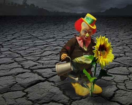 Hiába öntözöd, ha nem jó a talaj - krónika