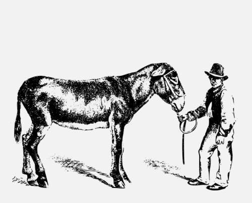 A gazda, a fia és a szamár – egy tanmese a megfelelési kényszerről
