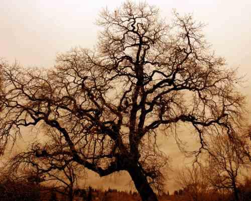 A tölgyfa élete – egy tanmese önmagunk elfogadásáról