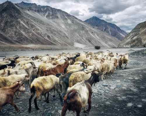 A pásztor és a vadkecskék – egy történet egymás megbecsüléséről