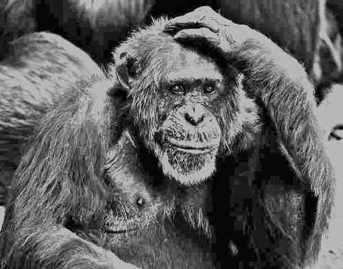 11 jele annak, hogy érett gondolkodású ember vagy