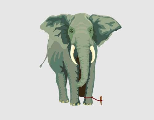 Az elefánt kötele – egy történet a bennünk lévő korlátokról
