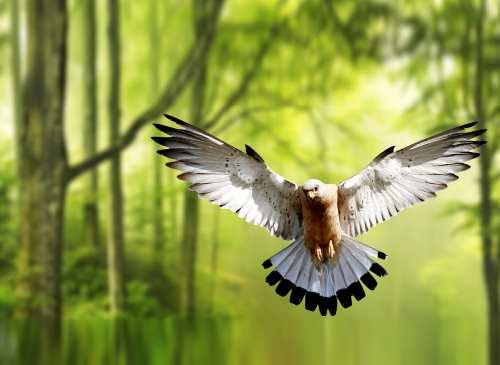 Az asszony és a madár – egy történet a mérgező szeretetről